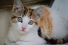 Кот щенка смотря прямо вперед стоковое изображение