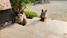 Кот & кот стоковое изображение rf