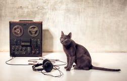 Кот любимчика битника с magnetophone и наушниками стоковые фотографии rf