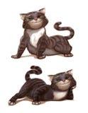 Кот, любимчик Стоковое фото RF