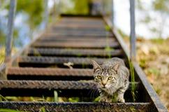 кот любознательний Стоковое фото RF