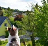 кот любознательний Стоковые Фотографии RF