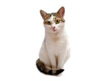 кот Стоковые Изображения RF