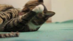 Кот сток-видео