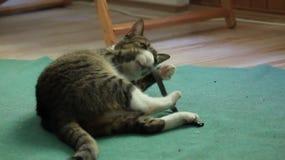Кот видеоматериал