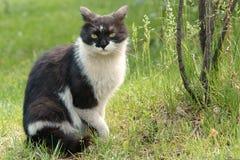 кот стоковые фото