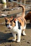 кот Стоковое Фото