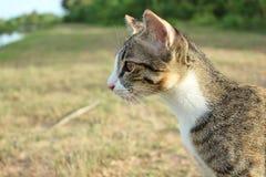 Кот. Стоковое Фото