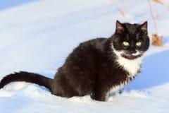 Кот. стоковые изображения