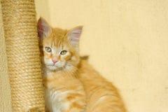 Кот стоковое изображение