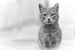 Кот Стоковая Фотография
