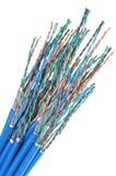 Кот 6 кабеля сети Стоковая Фотография RF