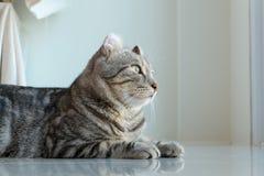 Кот стоковое изображение rf