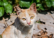 Кот стоковые фотографии rf