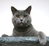 кот Стоковое фото RF