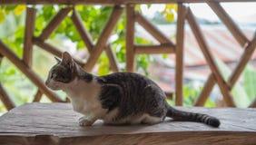 Кот стоковые изображения