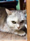 кот 2 Стоковая Фотография RF