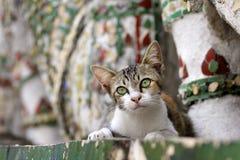кот bangkok arun мечтая wat виска Стоковые Изображения RF