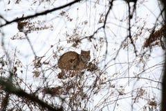 Кот Bob Стоковые Фотографии RF