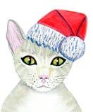 кот claus santa Стоковые Фото