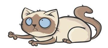 Кот Colorpoint Стоковое Фото