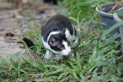 Кот Curios Стоковая Фотография