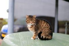 Кот Cuty Стоковое Изображение