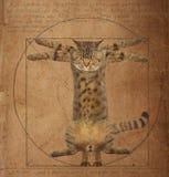 Кот Da Vinci стоковые изображения rf