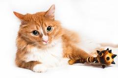 Кот, foxy безопасность Стоковые Изображения RF
