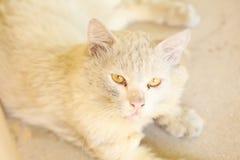 Кот Galring стоковые изображения