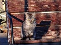 Кот Gosha стоковое изображение rf