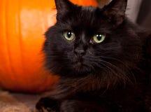Кот Halloween черный Стоковые Изображения