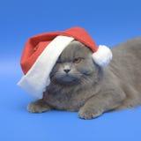 кот klaus santa стоковые изображения