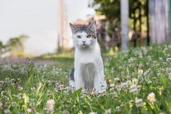 Кот Misha Стоковые Изображения