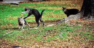 Кот Momma играя с ее котятами стоковая фотография rf