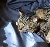 Кот napping в солнечном луче Стоковое Изображение