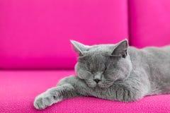 кот napping Стоковые Изображения