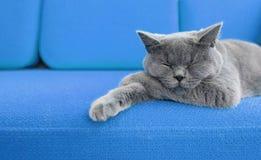 кот napping Стоковое Изображение