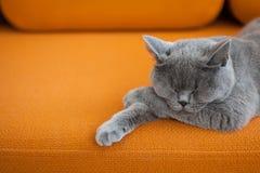 кот napping Стоковая Фотография
