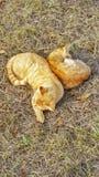 кот napping Стоковые Фото