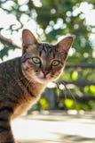 Кот Pussy Стоковые Фото