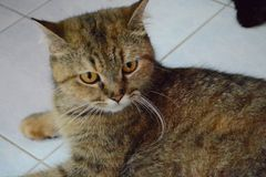Кот Pussy Стоковое фото RF