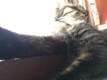 Кот Pussy Стоковая Фотография RF