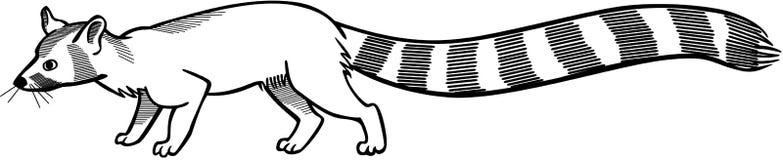 Кот ringtail бесплатная иллюстрация