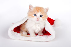 кот santa Стоковое Фото