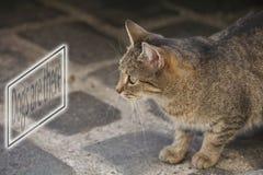 кот scarry Стоковые Фотографии RF