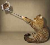 Кот Selfie стоковая фотография rf