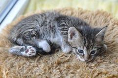 кот smal Стоковое фото RF
