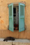Кот Snoozing французский стоковое фото rf