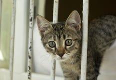 Кот Tabby выглядя любопытный к камере стоковое фото